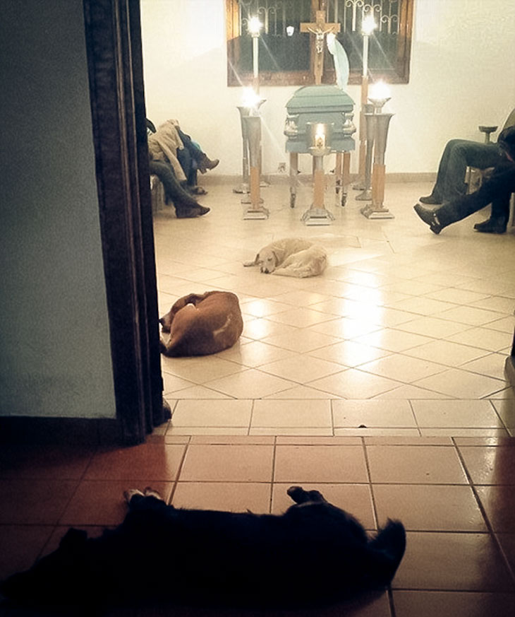 stray dogs funeral