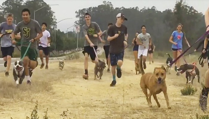 high school cross country team shelter dogs