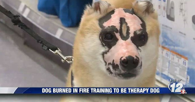taka_burn_therapy_dog