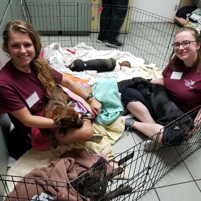 humane society tampa looking for dog snugglers