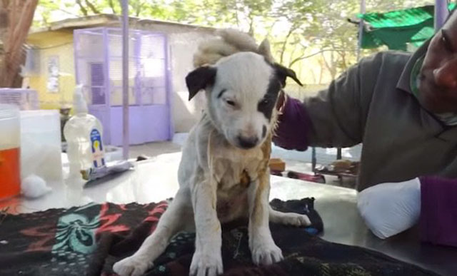 mama dog cries out for help for injured puppy