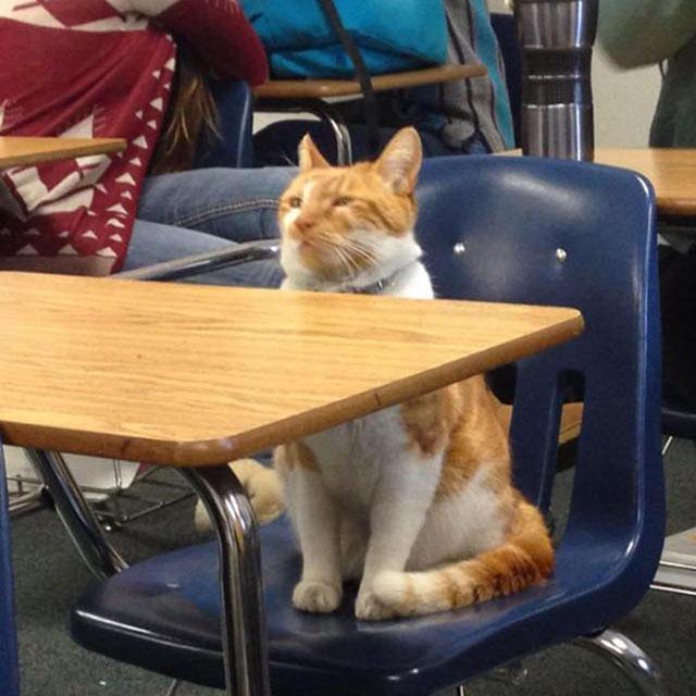 bubba the cat school