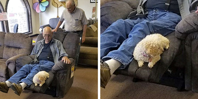 grandpa brings dog to shop for new chair