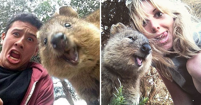 16 People Who Captured The Perfect Quokka Selfie