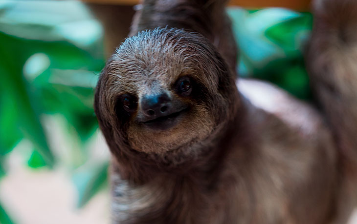 Are Sloths Dangerous