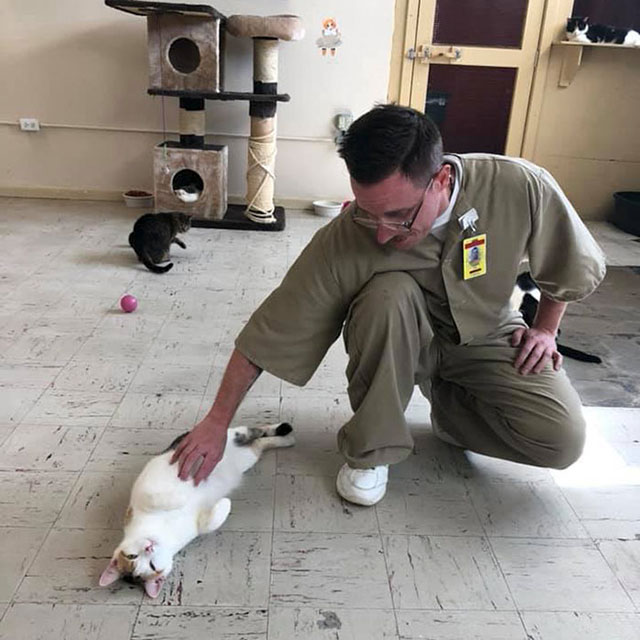 cats indiana prison