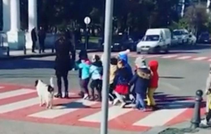 stray dog crossing guard