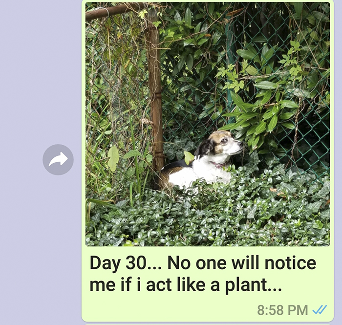 mom sends picture of sons dog everyday