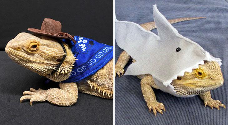 lizards in costumes