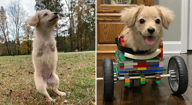 dog lego wheelchair