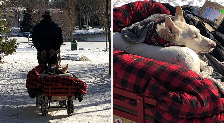 man takes paralyzed dog on walks