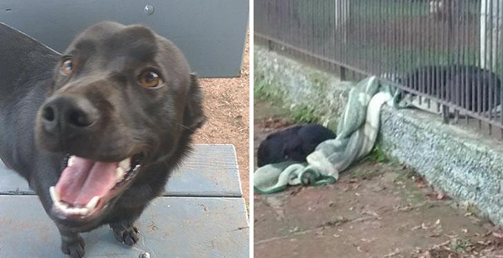 rescue dog shares blanket