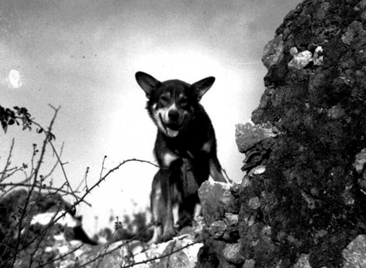 chips the dog ww2