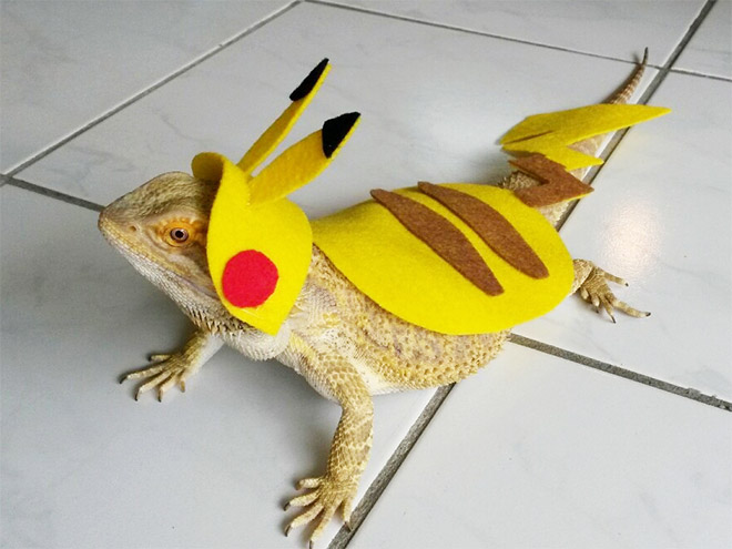 lizards in costumes