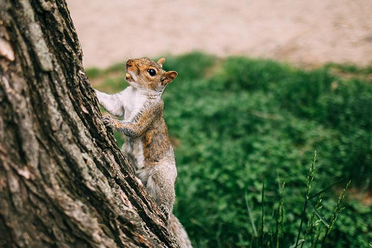 squirrels plant trees