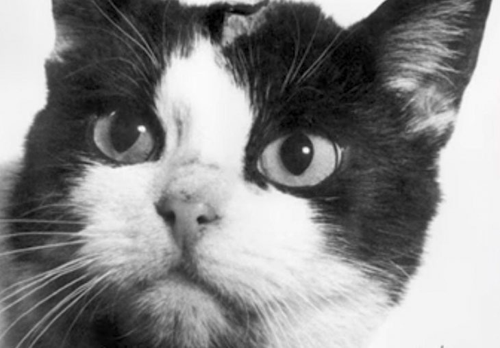 Félicette The Cat