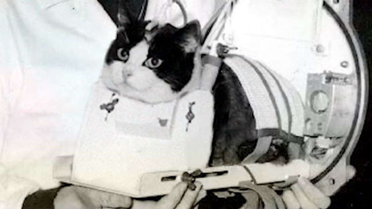 Félicette first cat in space