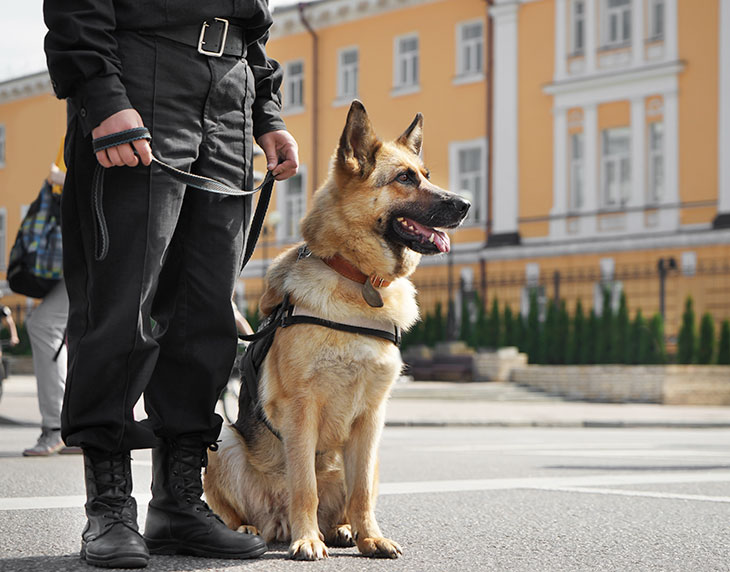 Everything You Wanted To Know About K9 Police Dogs