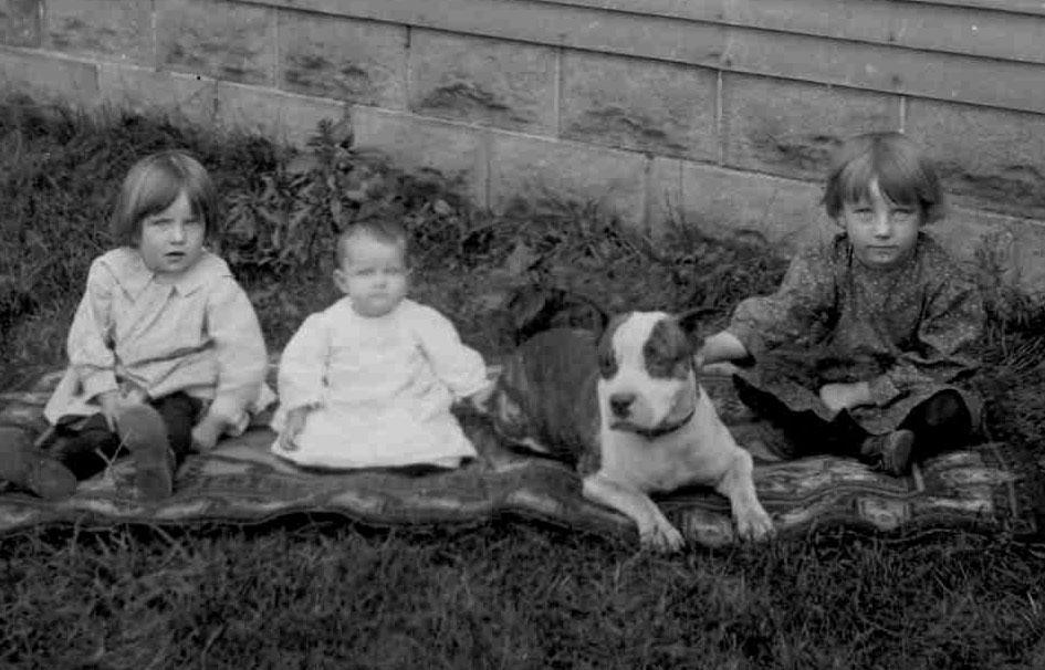 pitbull nanny dogs