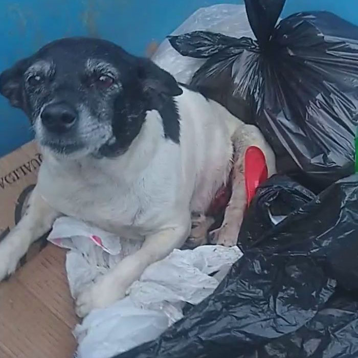 dog with tumor thrown in trash