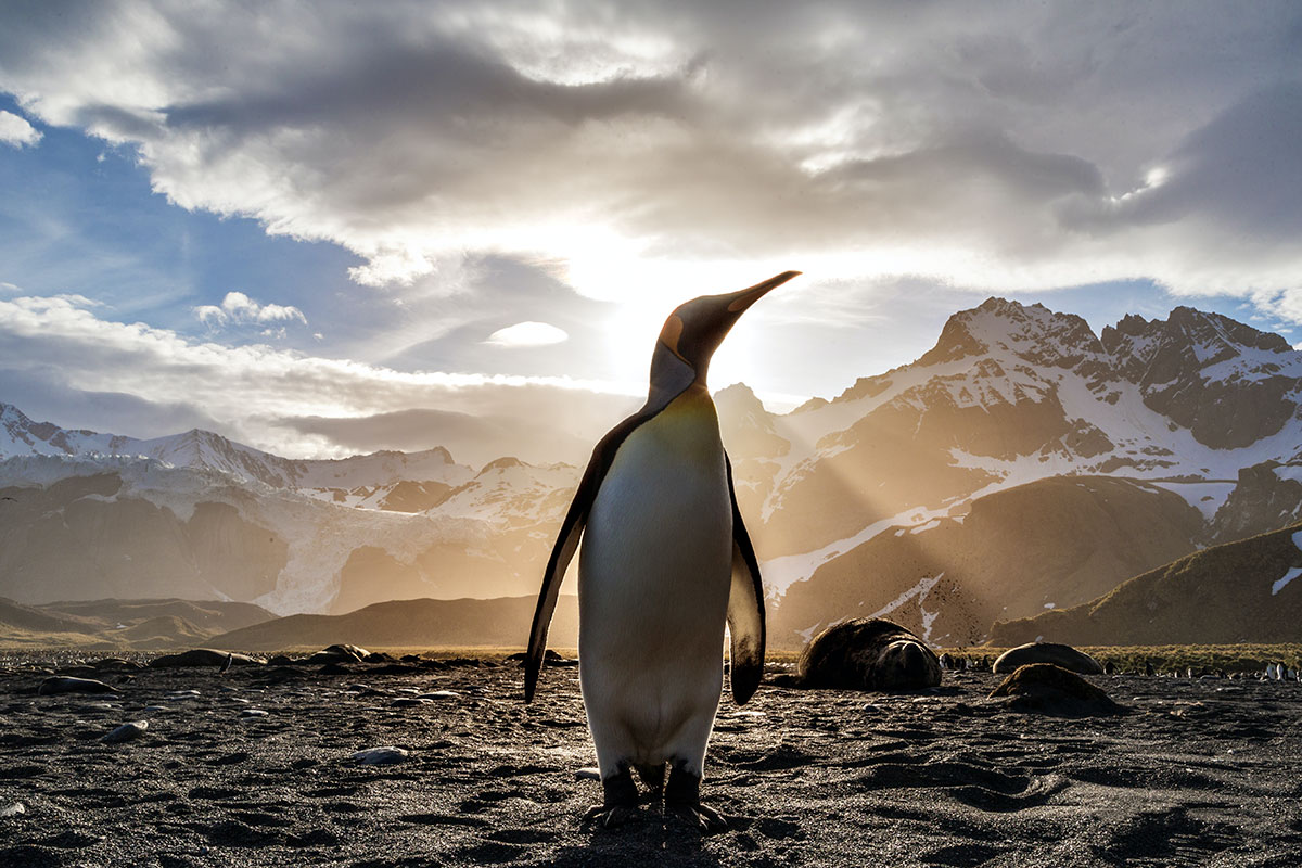 can you own a penguin as a pet