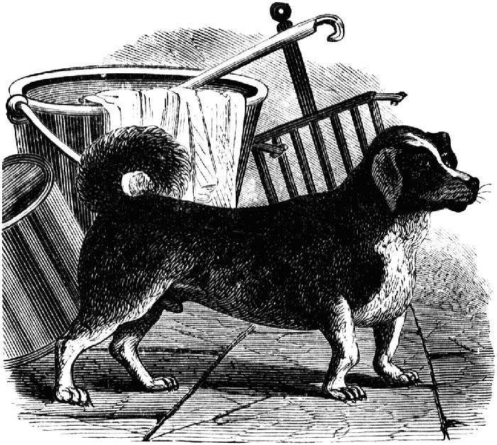 why do dog breeds become extinct