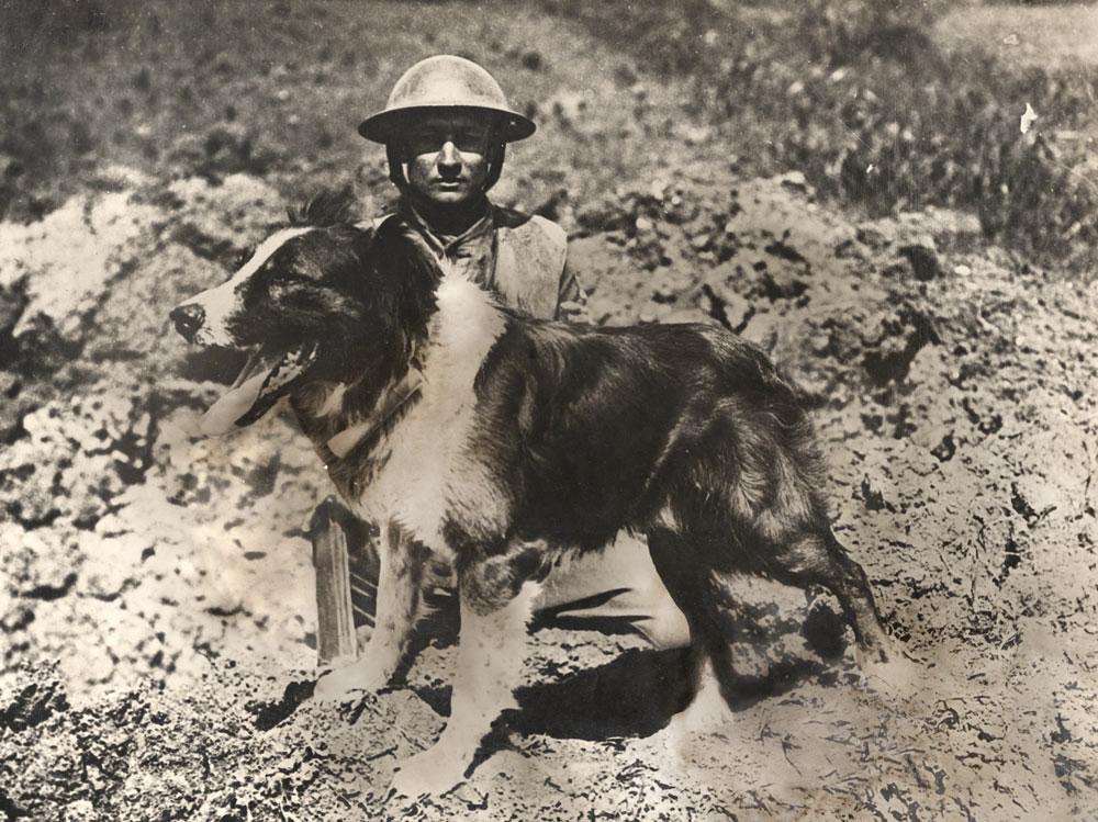war dog ww1