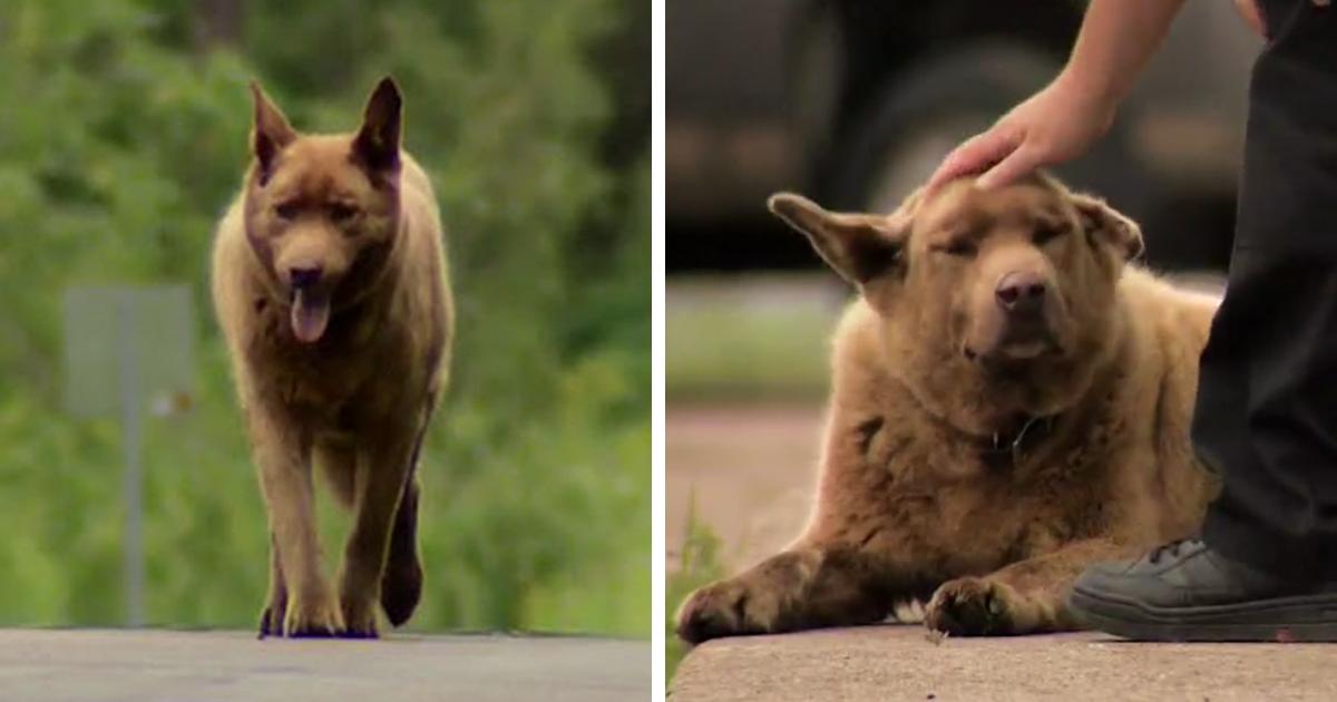 dog walks 4 miles everyday