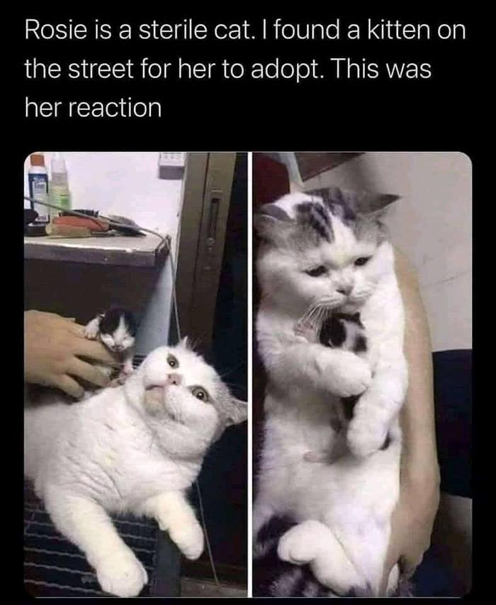 wholesome photos