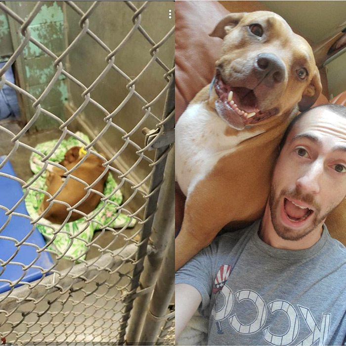 before and after rescued animals
